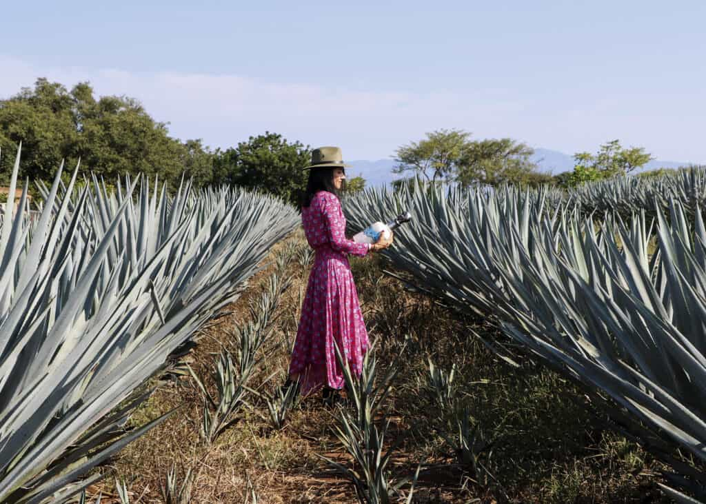 assets Magazin: Tequila Agave